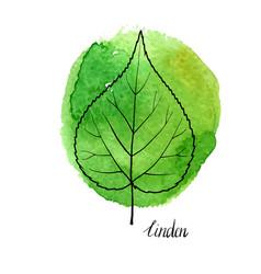 Leaf linden tree vector