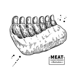 Raw ribs drawing beef pork or lamb meat vector