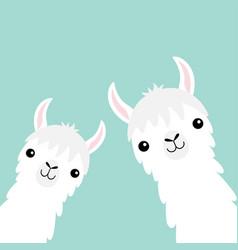 two llama alpaca animal set face neck fluffy hair vector image