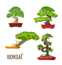 set of bonsai japanese trees grown in containers vector image vector image