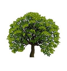 Big green tree symbol vector image vector image