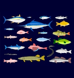 Edible Fishes vector image