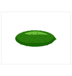 Cucumber isolated on white vector