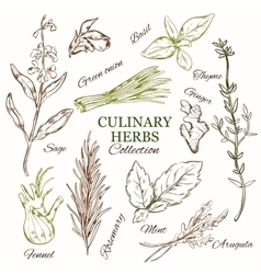 Hand Drawn Culinary Herbs Set vector image