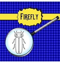 Insect in magnifier Firefly beetle Lampyridae vector