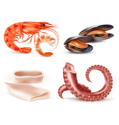 seafood realistic set vector image