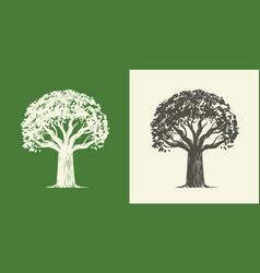 tree oak in vintage engraving style nature symbol vector image