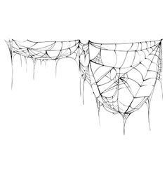 Spider web isolated on white background vector image vector image