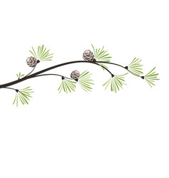 branches pine vector image
