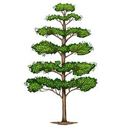 A Terminalia ivorensis tree vector