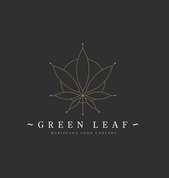 cannabis marijuana hemp green leaf flat symbol or vector image