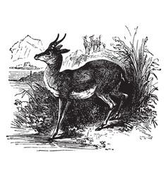 Elk vintage vector