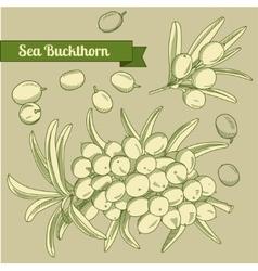 hand draw sea buckthorn branch vector image