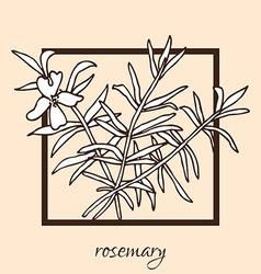 Hand drawn rosemary vector