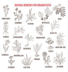 best herbal remedies for conjunctivitis vector image
