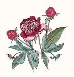 botanical hand drawn peony flowers vector image
