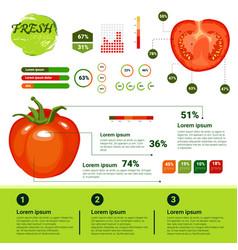 Fresh organic infographics natural vegetables vector
