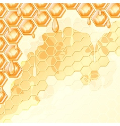 honey honeycomb vector image