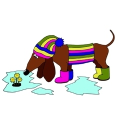 Image dachshund wearing rubber boots which vector