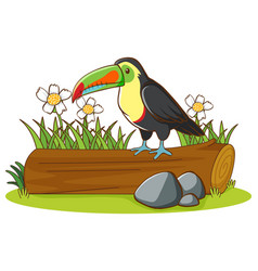 Isolated picture toucan on log vector
