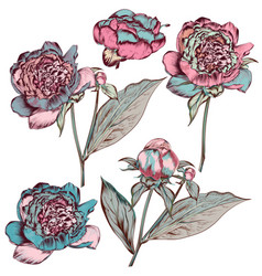 collection hand drawn colored peony flowers vector image