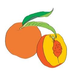 Ripe peach vector