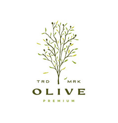olive tree leaf logo icon vector image