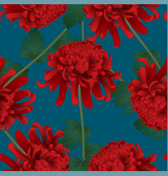 red chrysanthemum flower on indigo blue background vector image