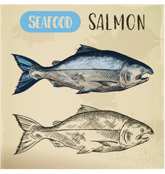 salmon fish sketch hand drawn seafood for menu vector image
