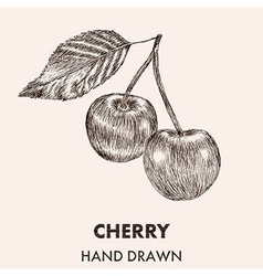 Sketch cherry Hand drawn Fruit collection vector