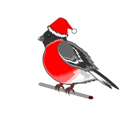 A Christmas bullfinch on a white background vector image