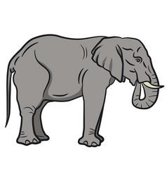 big elephant vector image