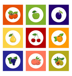 round fruit and berry icons on colorful background vector image