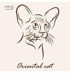 Oriental cat vector image vector image