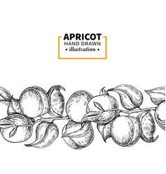 apricot branch seamless vintage border hand drawn vector image