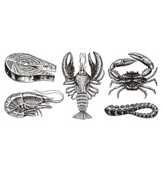 Crustaceans shrimp lobster or crayfish salmon vector