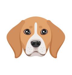 dog pet head icon vector image