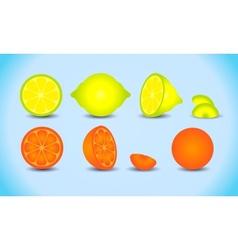 lemon orange citrus set vector image