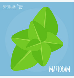 marjoram flat design icon vector image