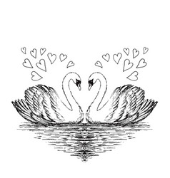 two swans sketch hand drawn vector image