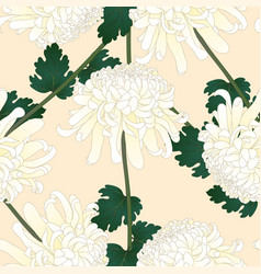 white chrysanthemum flower on beige ivory vector image