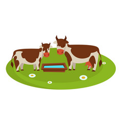 Cows with wooden trough full of water on field vector
