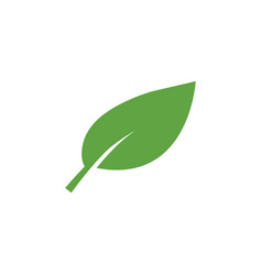 green leaf icon graphic design template vector image