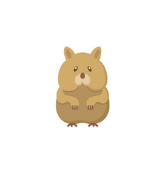 hamster flat icon vector image