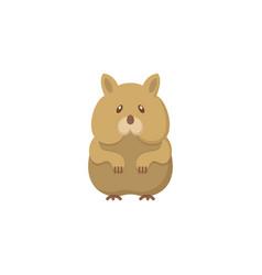 Hamster flat icon vector