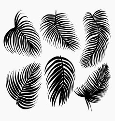 set black silhouettes tropical leaves vector image