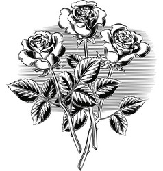 Three roses with their stems and leaves vector