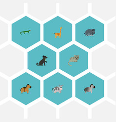 flat icons kitty kine horse and other vector image vector image