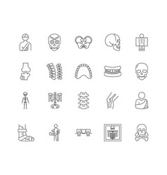 bone line icons signs set outline vector image