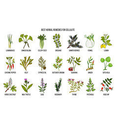 Collection best herbs for cellulite vector